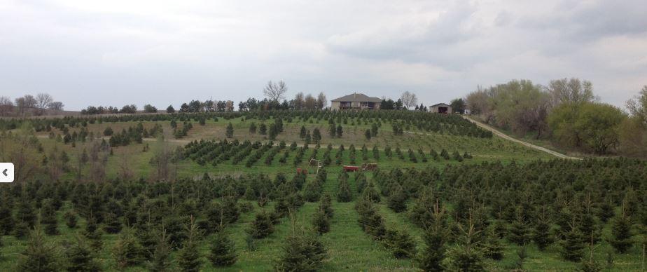 Omaha Area Christmas Tree Farms O Daniel Honda Omaha