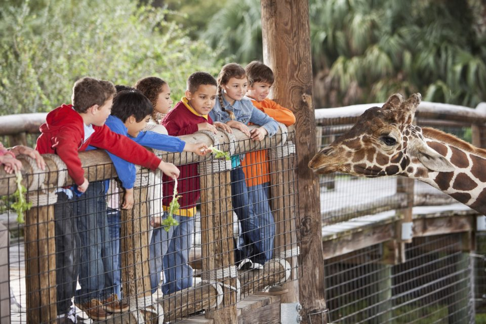 Children at zoo feeding giraffe